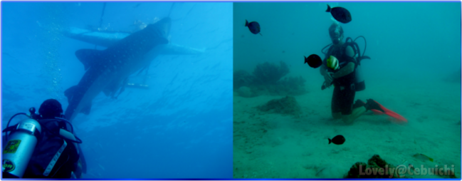 batch_diving