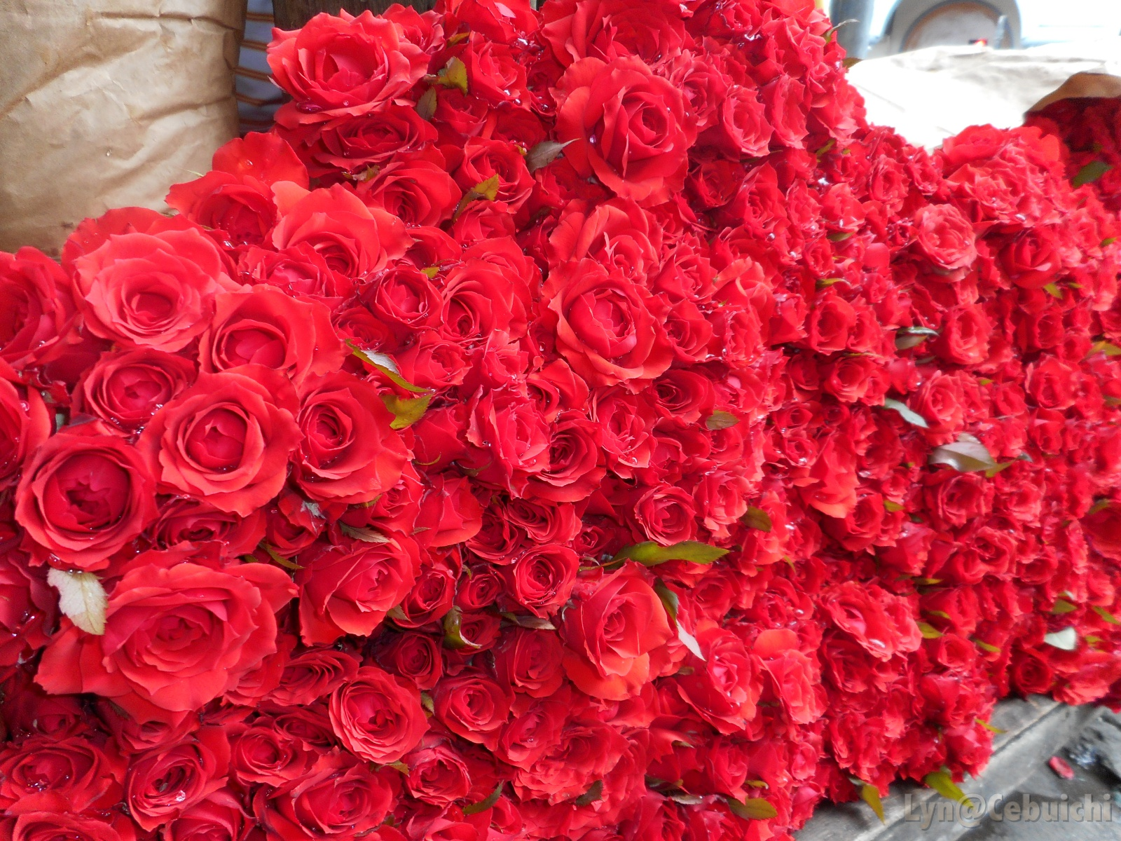 A new batch of fresh roses arrived earlier that morning.