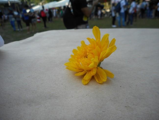 丁度落ちてきた花です!